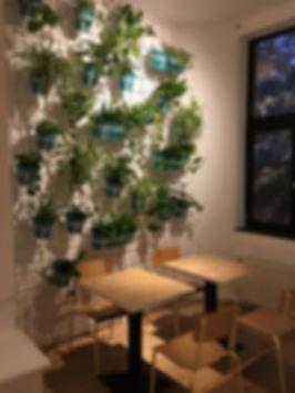 Mur vegetal.jpg