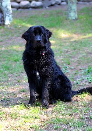 Dooby Pet of the Month2.JPG