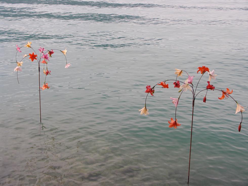 Lilien im See