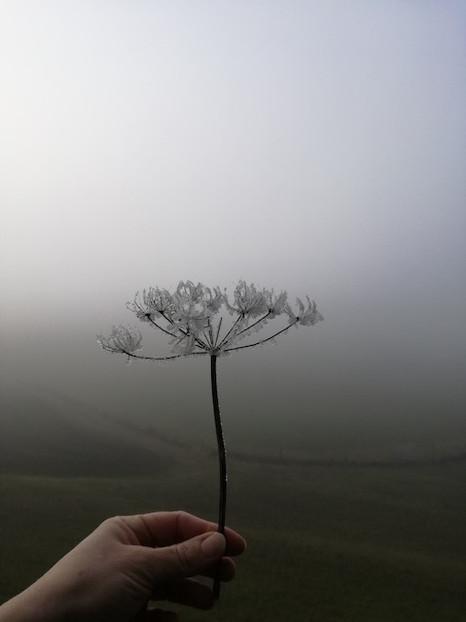 Nebel.jpeg