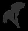 Accueil Lathyrus