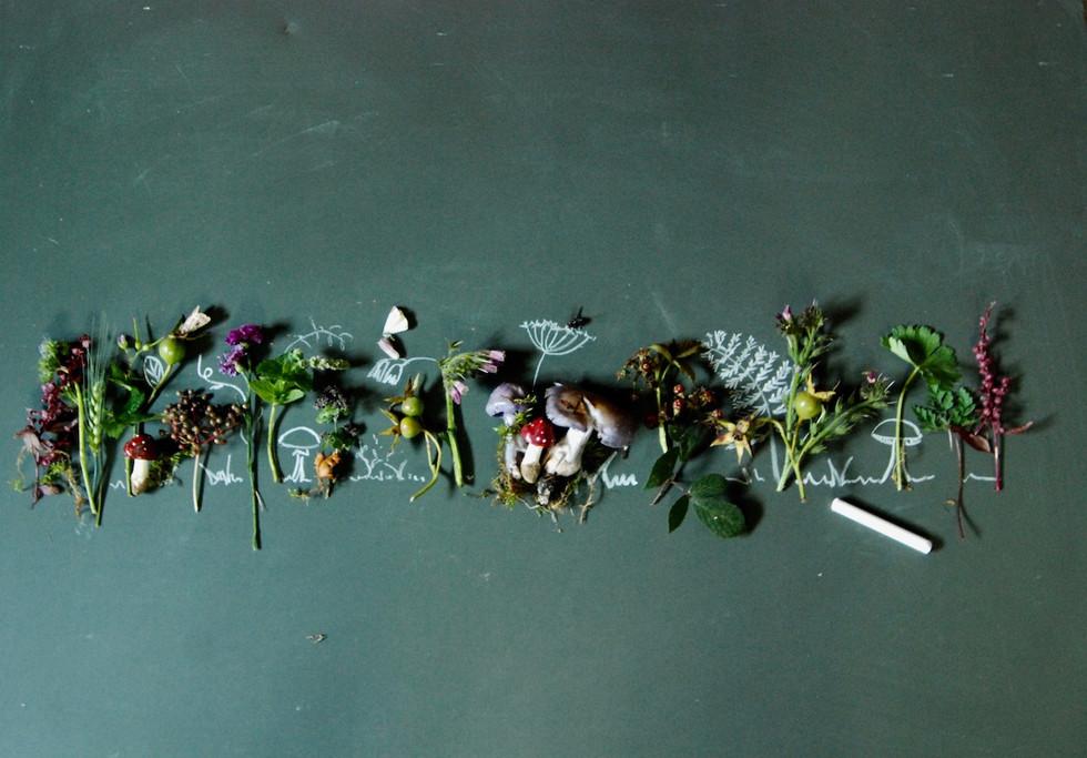 Der lila Pilz