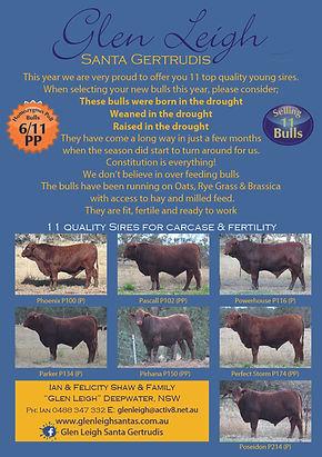 Glen Leigh Bulls 2020