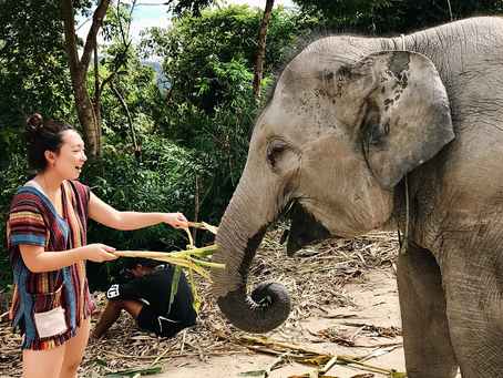 Elephant Conservatory & Night Market // Chiang Mai, Thailand