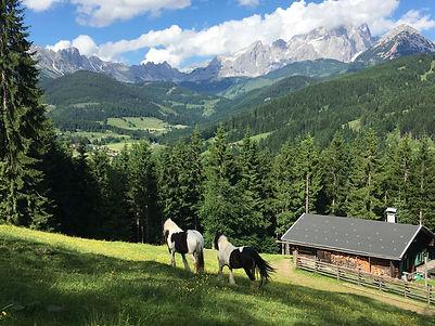 Wandern in Filzmoos, Löckenwaldhof