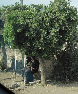 Kopi af Egypten 08_edited.jpg
