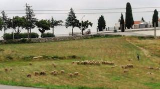 Start og slut ved kirkegården