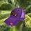 Thumbnail: RXO LOVE Purple Hat xoxo