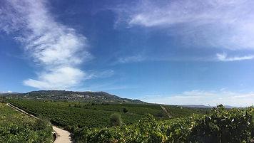 Terre Stregate vineyards.jpg