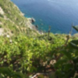 Possa - Liguria.jpg