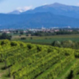 Meroi vineyard.jpg
