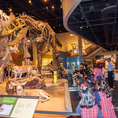 Elementary class visit to Perot Museum