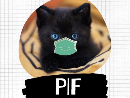Conhece a Peritonite Infecciosa Felina?