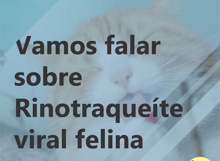 Rinotraqueíte viral felina