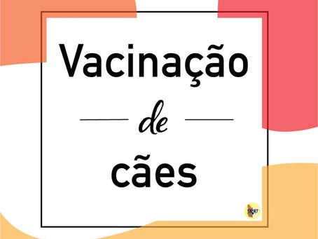 Vacinação de cães