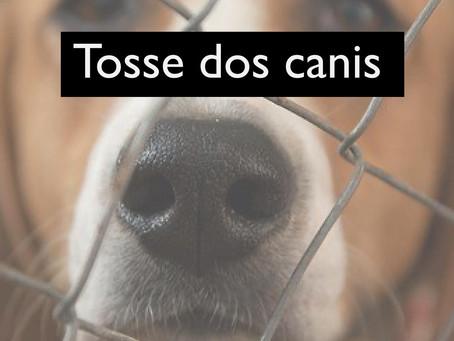 Conhece a Tosse dos canis?