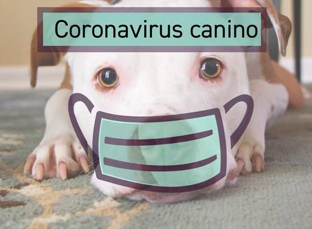 Coronavírus canino