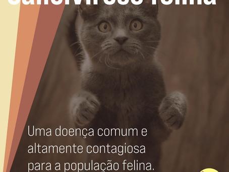 Conhece a Calicivirose Felina?