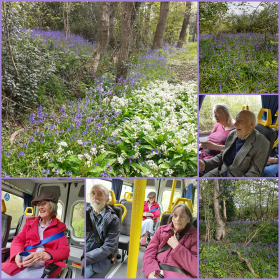 A trip out in the bus to see the bluebells!