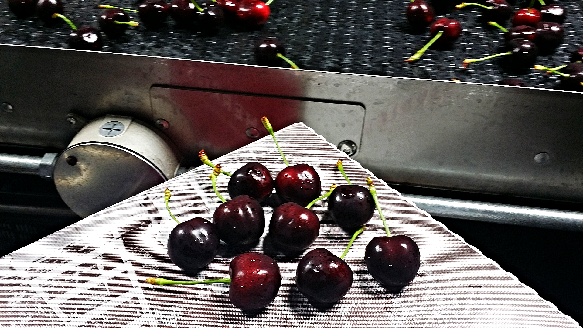 INSPECTING CHERRY QUALITY