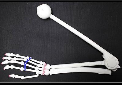Arm Model to Print.jpg