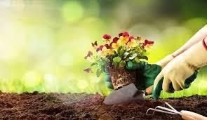 Successful Community Gardening