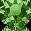 Thumbnail: 2078-Fern Green