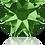 Thumbnail: 2088-Fern Green