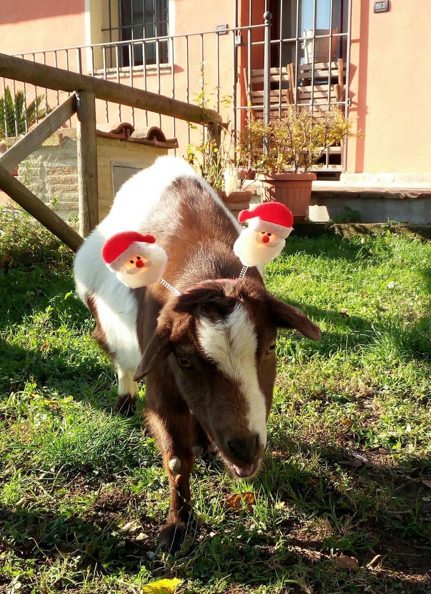 """""""Christmas"""" Giorgina"""