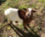 fattoria didattica gi animali