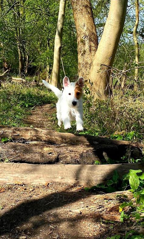 Jasper Jumping