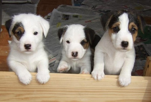 More Puppies