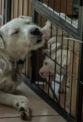 Kasper and his Pups