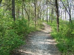Trail through the wilderness