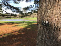 Newly placed tree sign