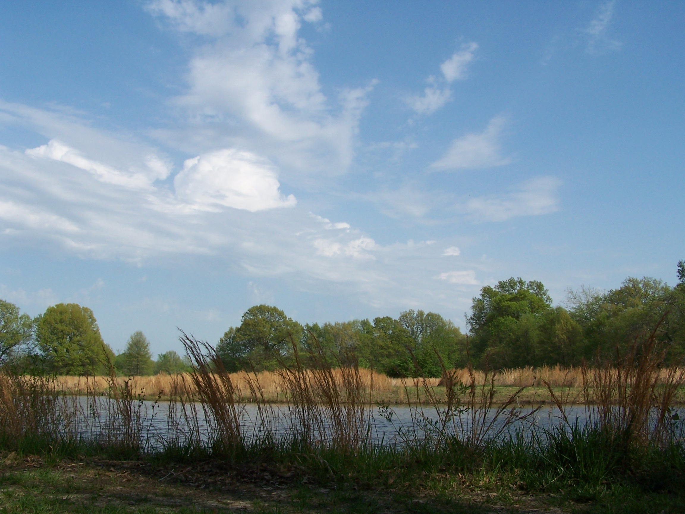 Clouds over the Wetland