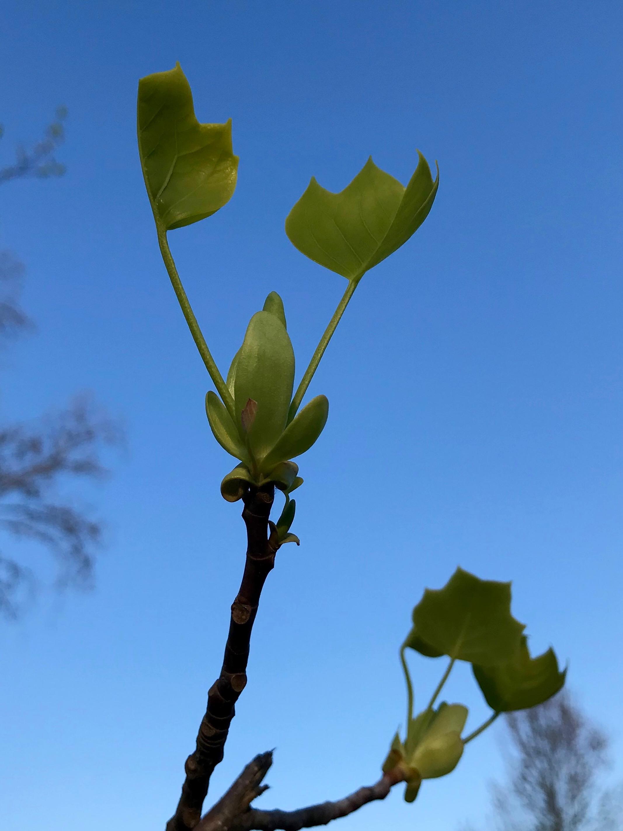 Spring growth