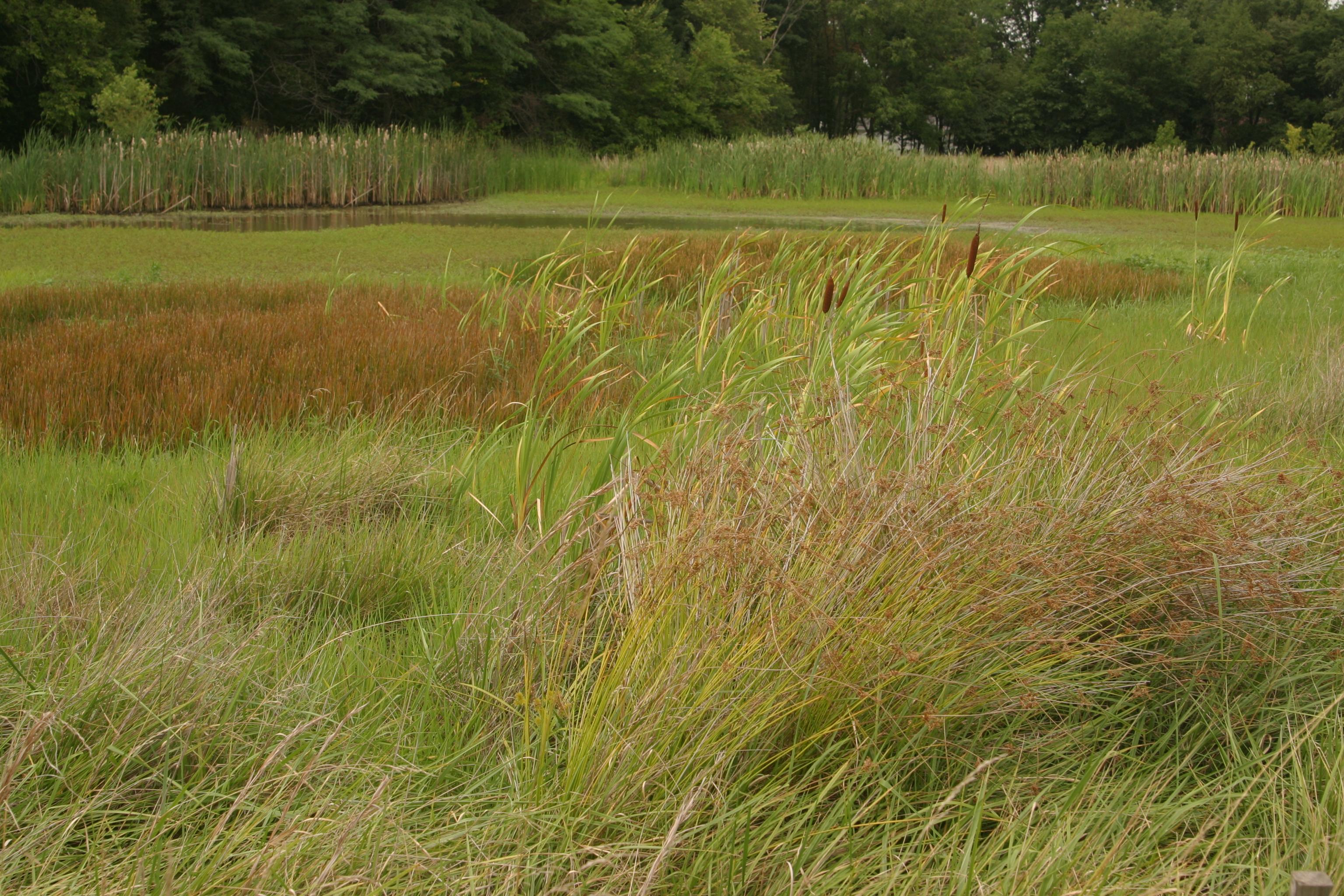 Wetlands Plant life