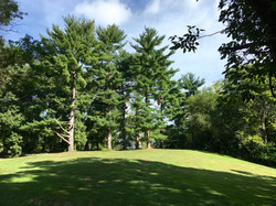 White Pines atop Stover's Hill