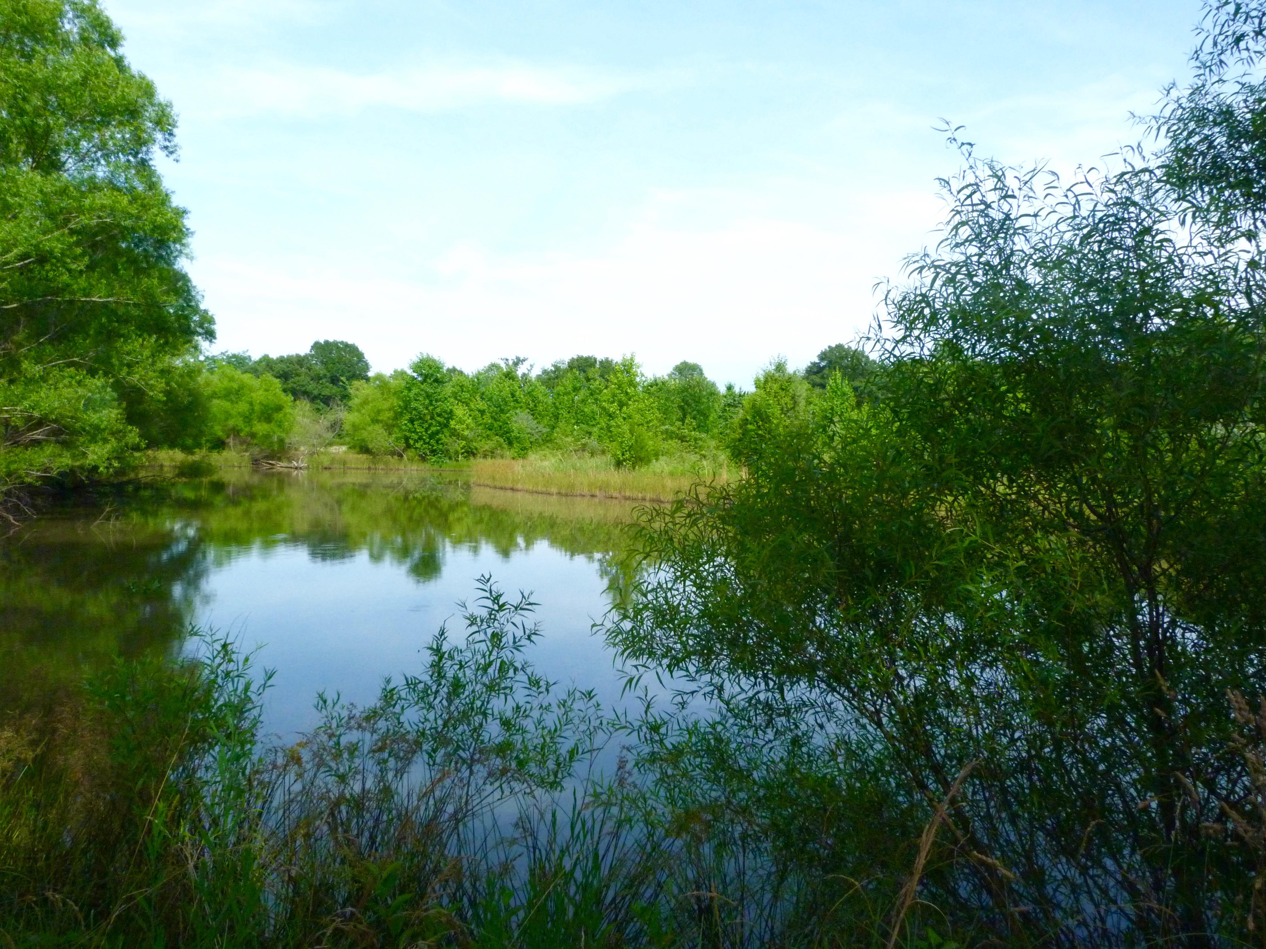 Wetlands Pool