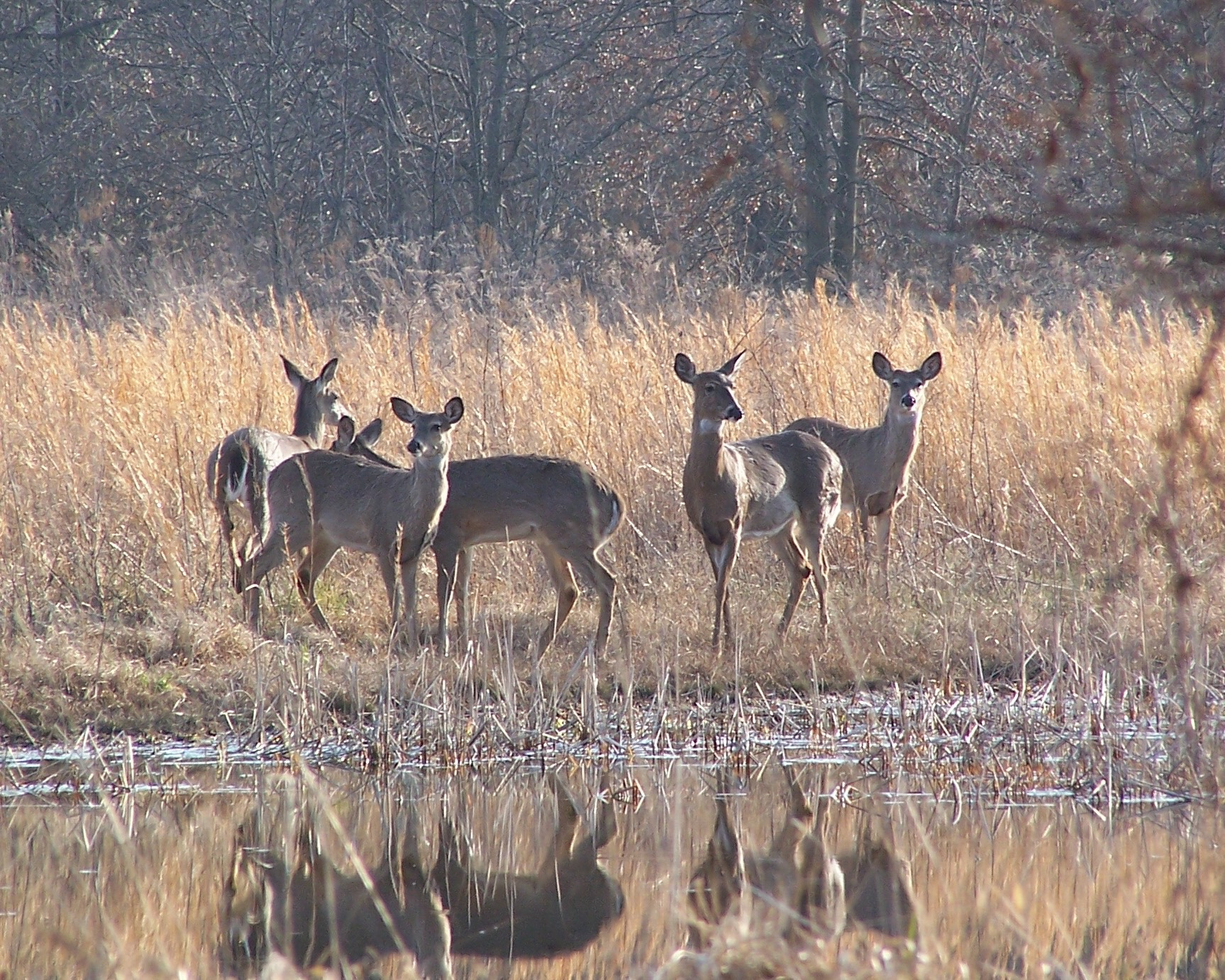 Wetland visitors