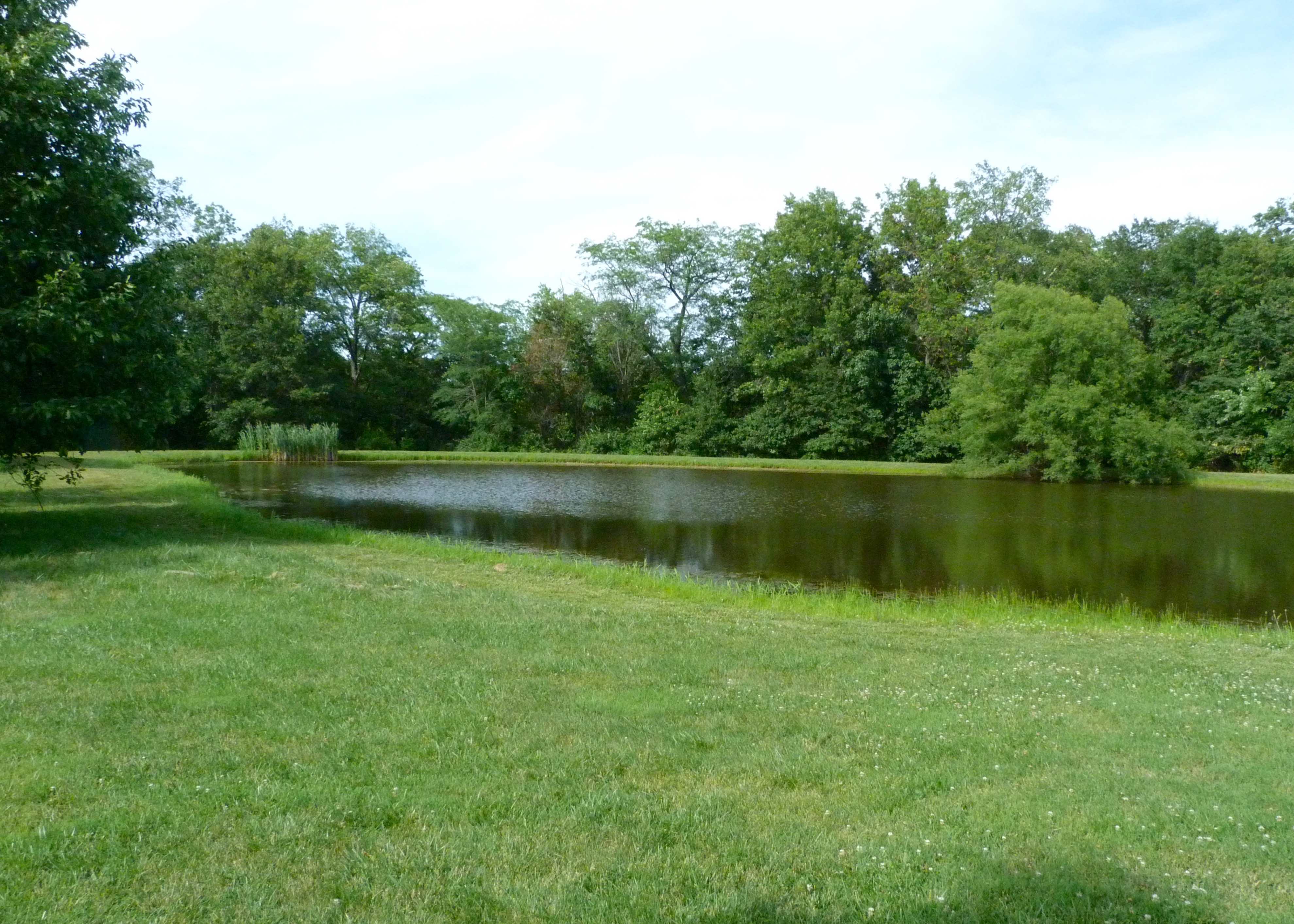 Speith Meadows pond