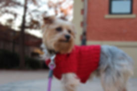 Tito with sweater.jpg