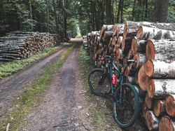 bicycle lean against logs in a forest