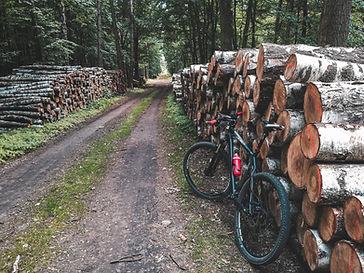 Montar en bicicleta en las maderas
