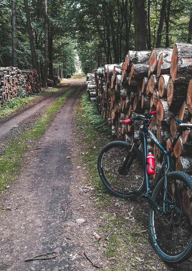 Fietsen in the Woods