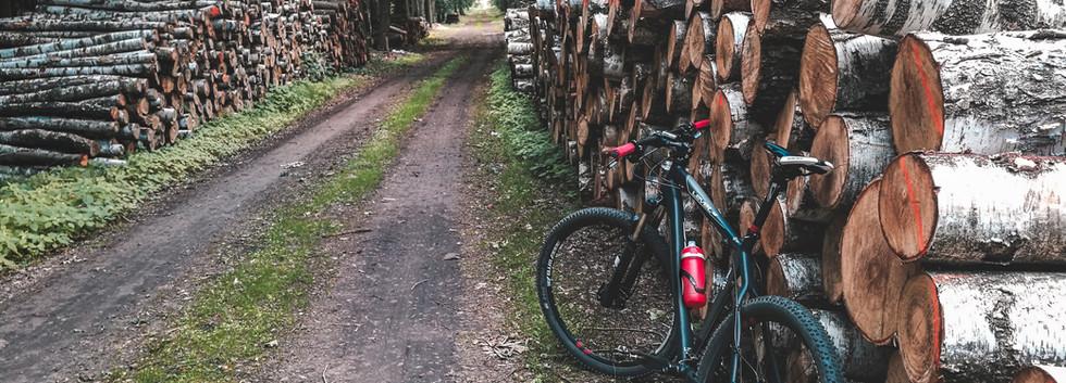 im Wald Radfahren