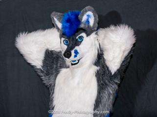 Fluffy husky