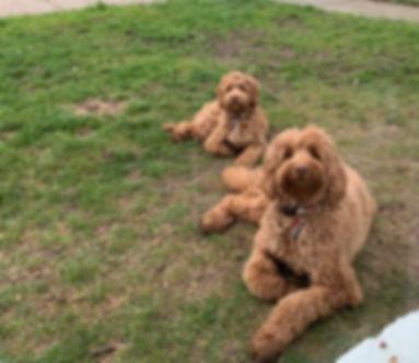 Dogs_edited.jpg