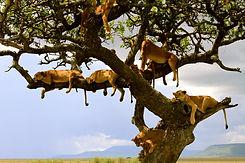 Lion family Serengeti Tanzania.jpg